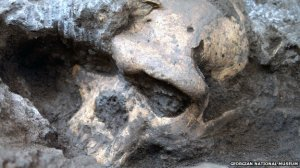 1.8 million-year-old skull
